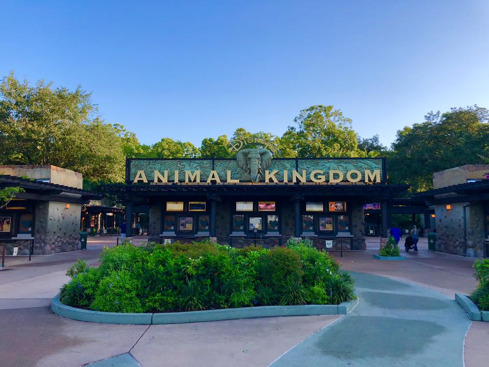The Lion King Animal Kingdom Entrance