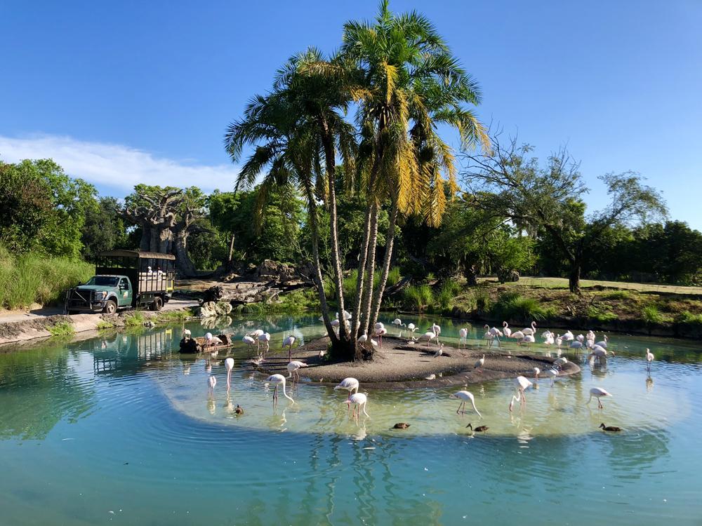 The Lion King Kilimanjaro Safari Flamingos